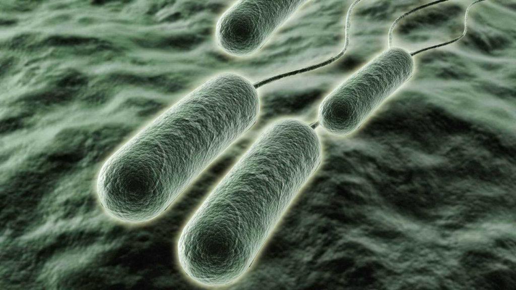 Biocidas para sanitización